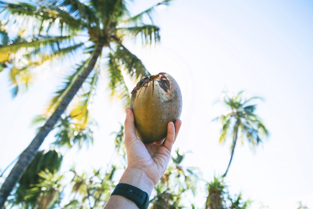 Hawaiian coconut
