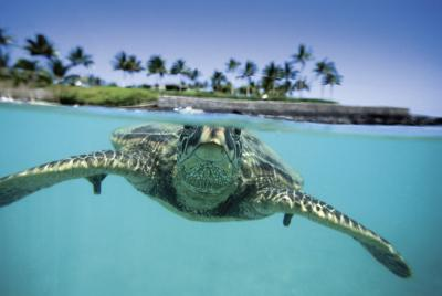 Swim with Sea Turtles in Aruba