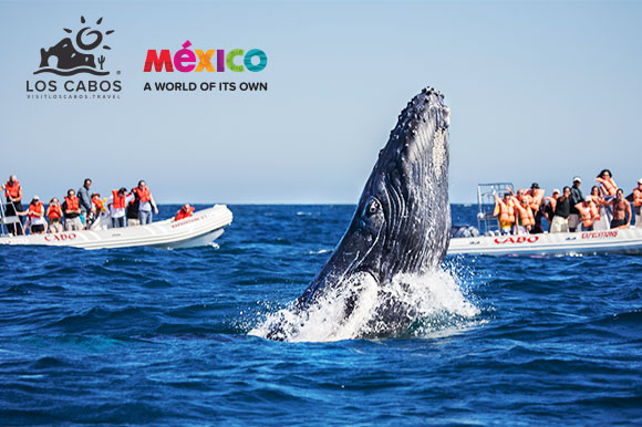 Tourists watch a whale from boats while on a tour in Los Cabos.
