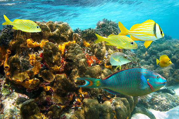 Colorful marine life in the Montego Bay Marine Park.